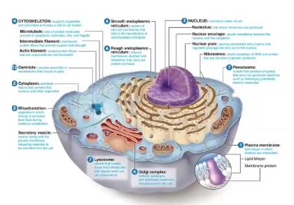 Een cel van binnen