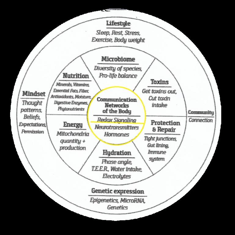 Communicatienetwerken van het lichaam. Redox-signalering, neurotransmitters en hormonen.