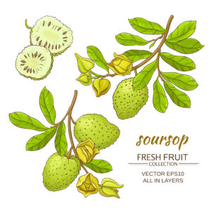 Soursop fresh fruit collection